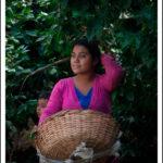 Foto 1 - Caffè, Matagalpa (Djamila Agustoni)